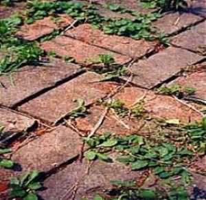Weed Control (Hard Surfaces)