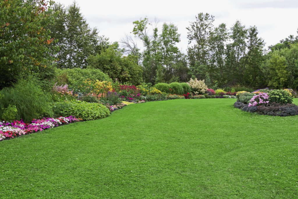 Image of a fine lawn