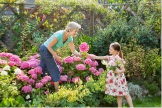 Border Fertilisation for your garden
