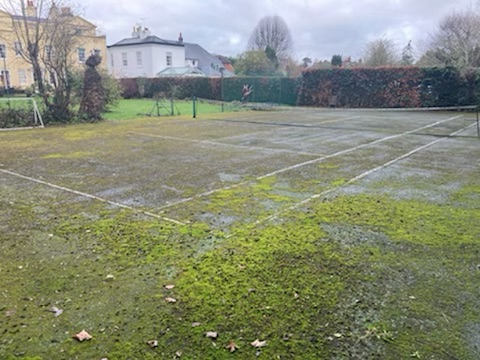 Moss Control (Hard Surfaces)